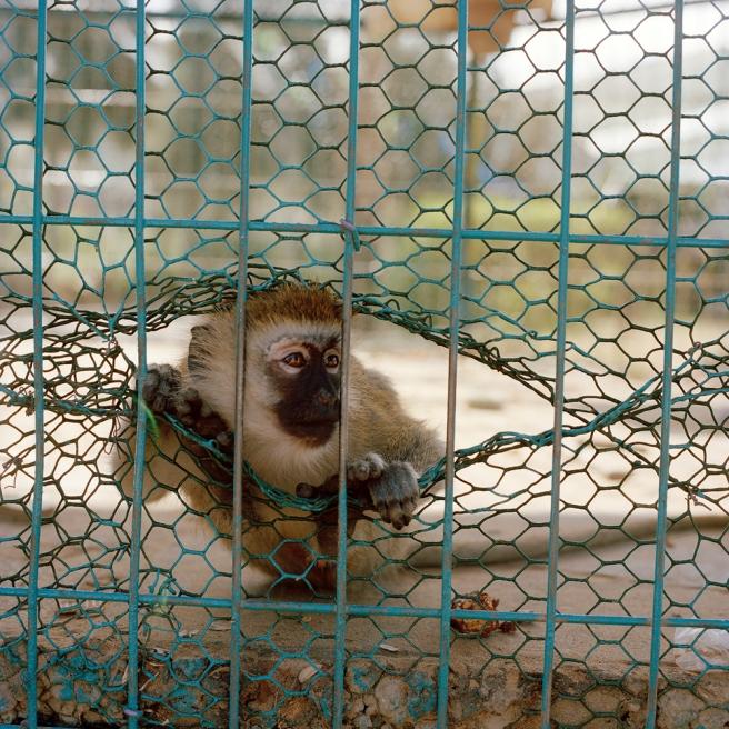 Gaza Zoos